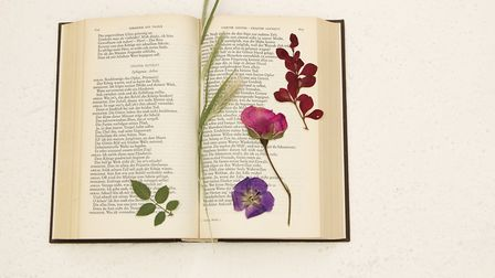 Pressed flowers in an old book Eskemar/Getty Images/iStockphoto