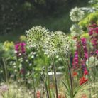 Suffolk garden writer Marion Welham tells you about the plants that thrive in a seaside themed garde