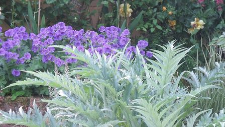 The cardoon or globe thistle can bring a touch of drama to your beach garden, says Suffolk garden wr
