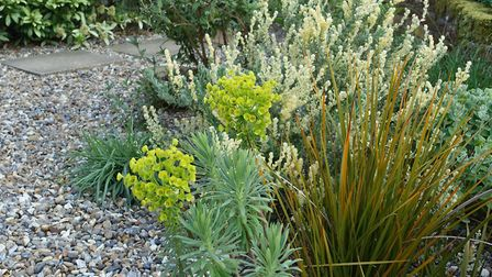 Marion Welham's seaside themed garden is inland from Southwold. Bright lime euphorbia stands out aga