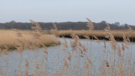 Norfolk's landscapes inspired the beauty range Scents pf place. Photo: Fiona Burrage