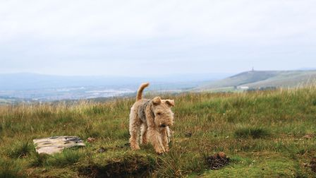 Alfie on the moors and off the lead