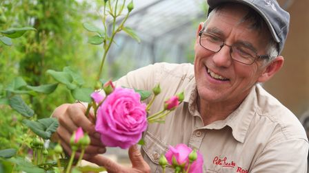 Ian Limmer of Attleborough rose specialists Peter Beales Roses. Photo: Denise Bradley