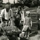 Strawberry picking in the 70s. Photo: Archant
