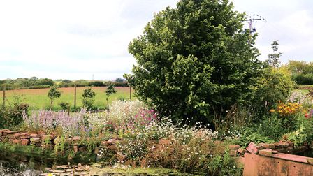 Herbaceous edging around the pond which was dug to aid the drainage