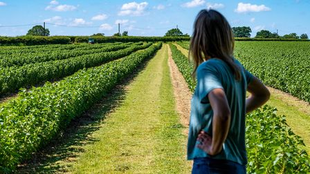 Rosie looks out at her blackcurrant fields. Photo : Steve Adams