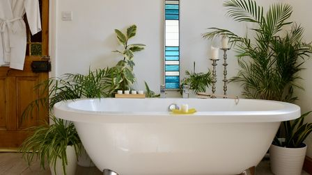 The bath is surrounded by house plants