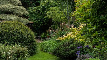 The variegated layers of the wedding cake tree Cornus controversa contrasts with the lush green of h