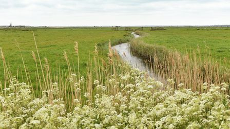 The Berney Marshes landscape next to Breydon Water. Picture: James Bass