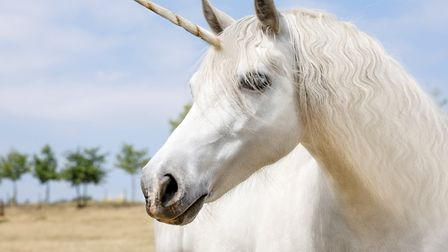A unicorn was one of the wierdest things to have been delivered over lockdown