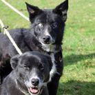 Bess and Roy, happy together at their new home
