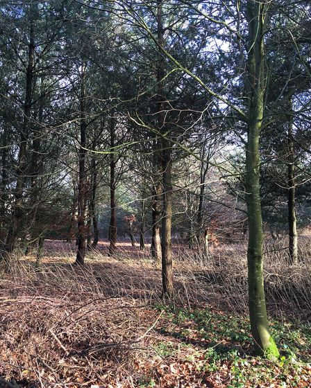 Woodland at the Peel Bank Trust.