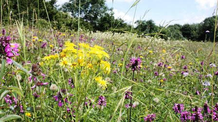 The colourful wildflower meadow at Salthill Quarry