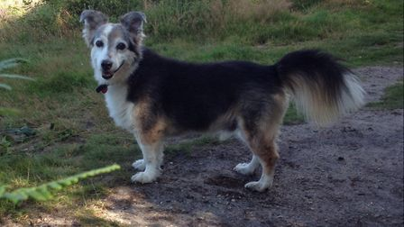 Lesley's and Mark's dog, the late, great Satsuma, who lived to be 19, or about 103 in human years. P