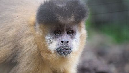 Best for Animal lovers: Looe Monkey Sanctuary provides a refuge for primates rescued from unsuitable