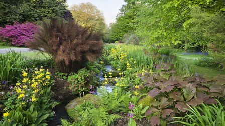 The Stream Garden at Trengwainton near Penzance. PICTURE: NT IMAGES/ANDREW BUTLER