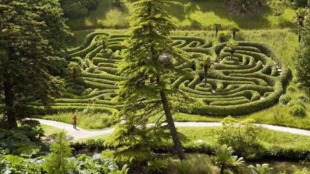 the laurel maze at Glendurgan with its children-sized low hedges. PICTURE: NT IMAGES/JOHN MILLAR