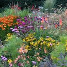 Late summer border featuring (from left) Helenium 'Sahin's Early Flowerer', the magenta Monarda 'On