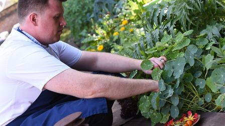 Chef Greig Young at the Northgate in Bury St Edmunds harvests from the restaurant's kitchen garden.