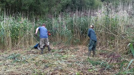 Trainees at workcutting reeds at Wigan Flashes for the Carbon Landscape Partnership