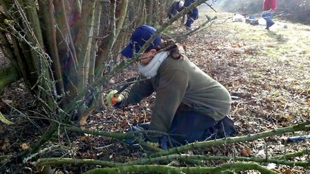 Trainees at worklaying a hedge for the Carbon Landscape Partnership