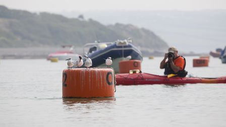 Using kayaks we got close to sandwich terns on the buoys