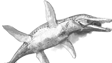 Pliosaurus, one of the contenders in the Marine Reptile category Illustration Mark Witton