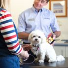 There are all kinds of reasons for mobility problems in dogs and the practice carries out a spectrum