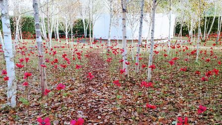 The poppies will be on display until 12 November