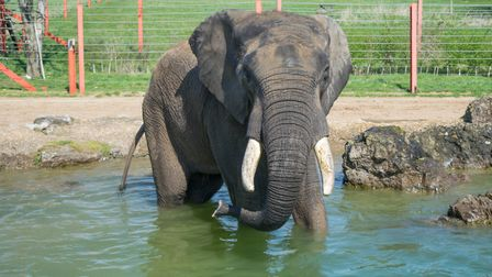 At Noah's Ark in Wraxall you can see all the big wild animals, with giraffes, elephants, tigers and