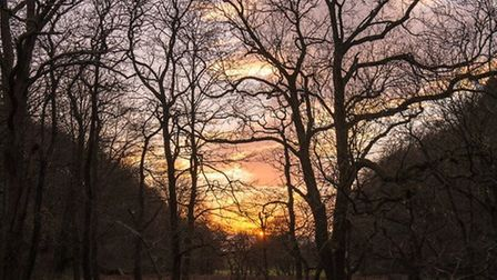 Sunset at Grizedale by John Lenehan