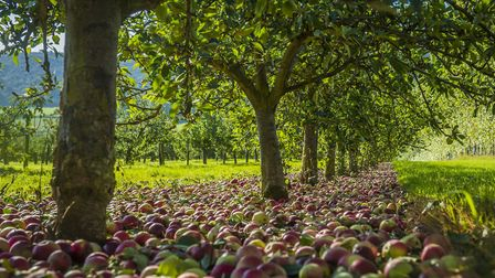 Somerset is full of fantastic cider makers. PHOTO: Thatchers