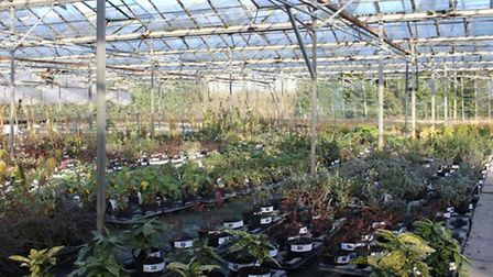 Woolpit Nurseries