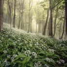 Woolland Woods, near Milborne St Andrew by Chris Frost/ Landscape Photographer of the Year 2020