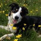 Border collie Cosmo is helping transform lives across Lancashire