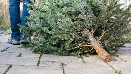 Where to buy your Christmas tree in Norfolk (photo: SKatzenberger, Getty Images)