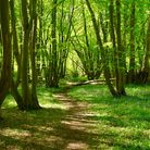 Pathway through Wayland Wood Picture: Lydia Taylor/iwitness24