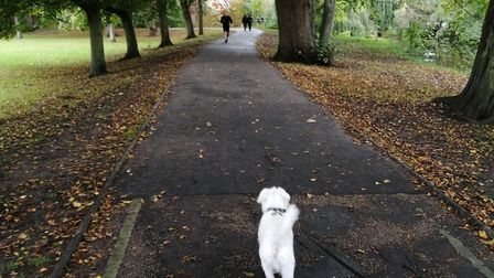 Ernie explores Lower Castle Park