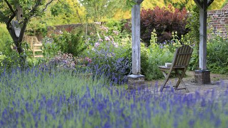 Gazebo with lavender in the garden at Paycocke's House and Garden, Essex.