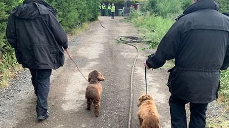 Dogs who were reunited with their owners after araid inWillingham in June 2020