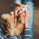 Cohabiting with cats isn't all fun and catnip...