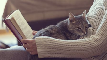 Cats aren't being 'naughty' when they scratch the sofa, they're just being cats.
