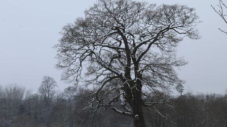 snow tree st albans