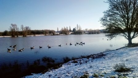ducks lake snow St Albans