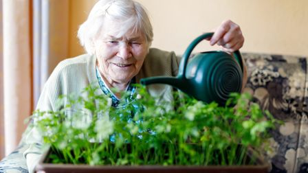Keeping your plants alive will bring a sense of achievement.