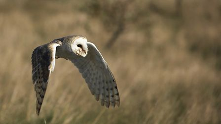 Barn owls are breeding on the site