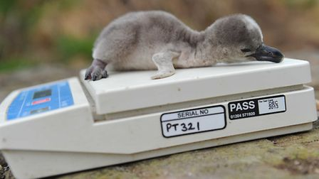 Chester Zoo - a weigh-in for lightweight Doctor - photograph by Steve Rawlins