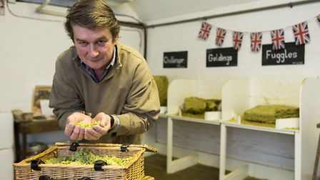 Hugh Phillimore inspects the hops