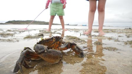 Crab on the beach by Adam_Cormack