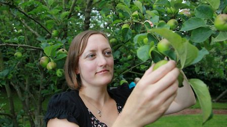 Katie Lowe inspecting some Cheshire 'Millicent Barnes' apples